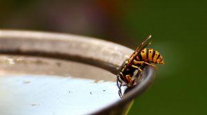 Wespenbestrijding Geldrop